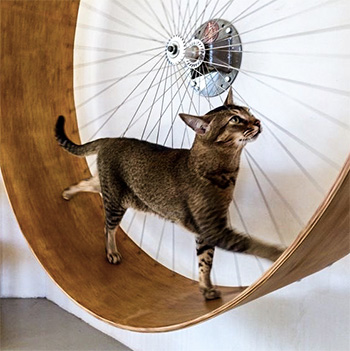 cat wheel by wheelsmith
